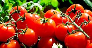 Sözleşme imzalandı! Rusya domates yasağını kaldırıyor ama bir şartla