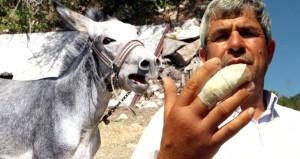 Eşek, saldırdığı sahibinin parmağını kopardı