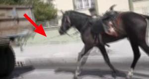 Traktöre bağladığı atı, sıcağın altında kilometrelerce koşturdu