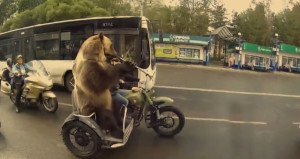 Boz ayı, motosiklet üzerinde zurna çaldı; görenler telefona sarıldı