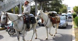 3500 km yol yaptı, mevzu Adıyaman'da çıktı! Şikayet edip foto çektiler