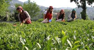 Çay fiyatlarına yapılan yüzde 20'lik zam geri alındı