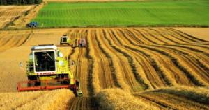 Fakıbaba iddialı! Dünyanın tahıl ambarı Türkiye olacak