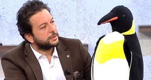 Yasak kararı aldıran Gülben'e penguenin arkasına saklanıp yüklendi