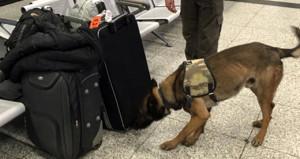Havalimanında rezalet görüntü! Türk yolcuları köpeklerle aradılar
