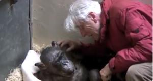 Ölüm döşeğindeki şempanze herkesi ağlattı