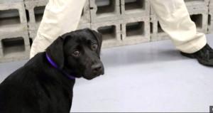 CIA, isteksiz köpeği emekliye ayırdı