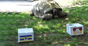 Kahin kaplumbağa, derbi tahminini yaptı