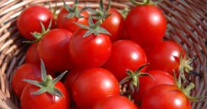 Rusyadan bir domates açıklaması daha: Erkene çekebiliriz