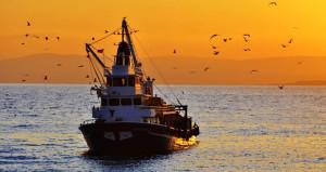 Balıkçılar isyanda! Felaket dönemleri hariç böylesi görülmedi