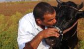 Düştüğü kuyudan kurtarılan ineğini böyle öptü