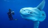 Okyanusun en derinindeki hayvanların bile midesinden plastik çıktı