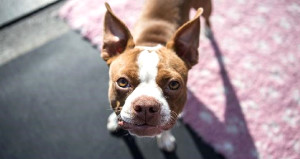Köpeği olanlar yüzde 36 oranında daha uzun yaşıyor