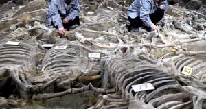 Şaşkına uğratan mezar: 90 tanesini öldürüp, çukura atmışlar!