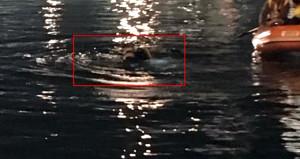 Limanda feci kaza! Otomobil denize uçtu: 1 ölü, 3 yaralı