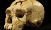 Çin'de bulunan kafatası, evrim hakkında bildiklerimizi değiştirebilir