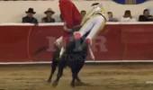 Kızgın boğa, cinsel organından boynuzladığı matadoru, havaya fırlattı!