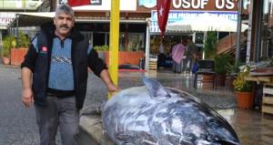 Uyanık balıkçı, basit bir taktikle dükkanına yüzlerce müşteri çekti