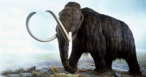 Trilyonluk açık artırma! 3 buçuk metrelik mamut iskeleti satıldı