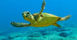 Kaplumbağa eti ölüm getirdi! 8 çocuk zehirlenerek hayatını kaybetti