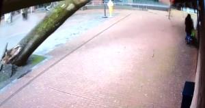 Devasa ağaç bir anda devrildi, anne ile bebek kılpayı kurtuldu