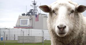 Dünyaya kök söktüren ABD, Romanyanın koyunlarına diş geçiremedi!
