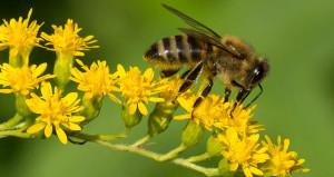 10 yıl ile yargılanacaklar! İki çocuk 500 bin arıyı öldürdü