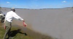 Irmak kenarında pirana besledi, görüntüler ürküttü