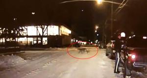 Vahşi hayvan karşıdan karşıya geçti, polis rahatlığıyla şaşırttı