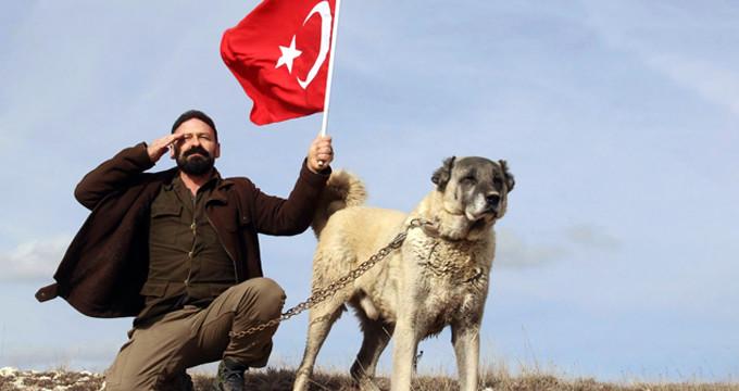 Dünyaca ünlü Kangal köpekleri Afrin'e hazırlanıyor