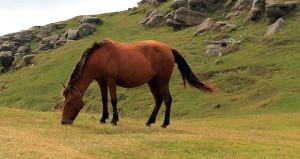 Bakanlık düğmeye bastı! At ve eşeklere de kimlik geliyor