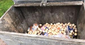 Çöpe atılan yumurtaların içinden civciv çıktı, halk seferber oldu