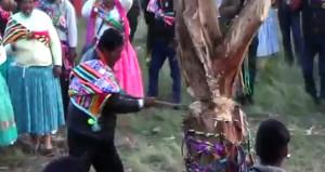 Festivalde korkunç kaza! Kestiği ağaç üzerine devrildi