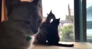 Kedinin üzüntüsü sosyal medyayı salladı