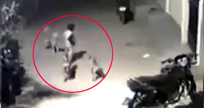 Minik çocuk, kendisine saldıran sokak köpeklerine böyle kafa tuttu