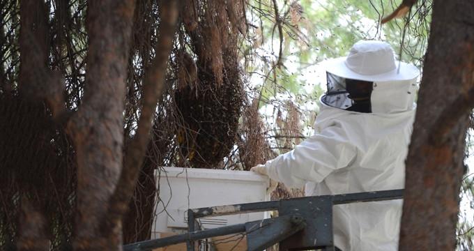 Haber yapmak için gitti, vatandaşları arıların istilasından kurtardı