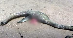 ABDde sahile vurdu, ne olduğu çözülemiyor! 1,5 metre uzunluğunda