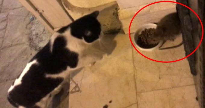 Beyoğlu'nda sokağı sahiplenen fare, herkese kafa tutuyor!