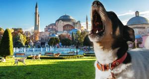 Köpekler ezan sesi duyunca neden ulur?