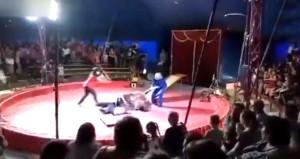 Sirkte korku dolu anlar! Sinirlenen ayı, bir anda eğitmenine saldırdı