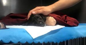 Yavru köpek vahşetinde olay saati çelişkisi