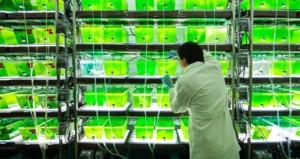 Türk bilim adamlarının yeni buluşu benzine bağımlılığı bitirecek!
