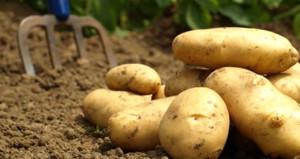 Hükümet, patates fiyatlarını düşürmek için ilk adımı attı