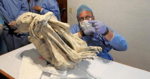 Yeni bir insan türü olabilir! Üç parmaklı, mumyalanmış ceset bulundu