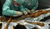 5 bin yaşındaki buz adamın midesini açıp son yemeğini öğrendiler!