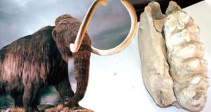 Yozgatta bir zamanlar mamutlar vardı: Milyonlarca yıllık fosil bulundu