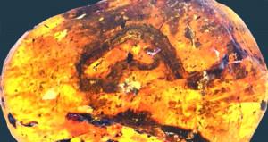 Kehribar içine gizlenmiş 99 milyon yıllık yılan bulundu!