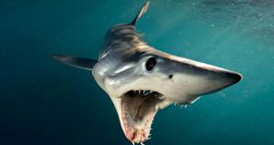 New Yorkta 70 yıl sonra ilk: Köpekbalıkları 2 çocuğa saldırdı!