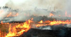 İstanbul'da korkutan yangın! Yerleşim merkezine doğru ilerliyor