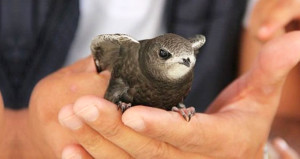 Fil Suresinde adı geçen ebabil kuşu, Erzurumda bulundu!